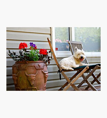 A dogs life is hard work Photographic Print