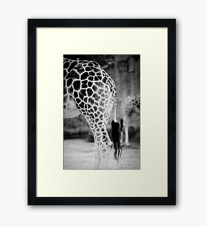 Two of a kind. Framed Print