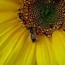 I Will Bee Your Shelter by Jess Meacham