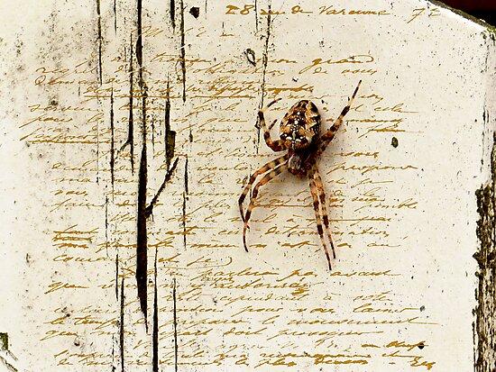 Spider Letter  by Yvon van der Wijk