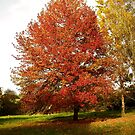 An Autumn Colourful Display by hootonles