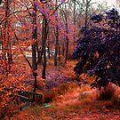 Brilliant Autumn Colors By the Bridge by Jane Neill-Hancock