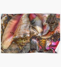 Conchs at the Fish Market in Montagu Beach, Nassau, The Bahamas Poster