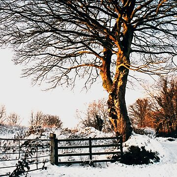 Snow and sunshine by woodentop