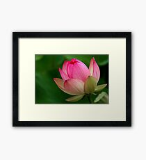 The Lotus Flower Framed Print