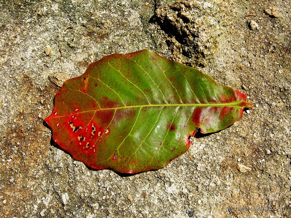 just a leaf by michelle meenawong