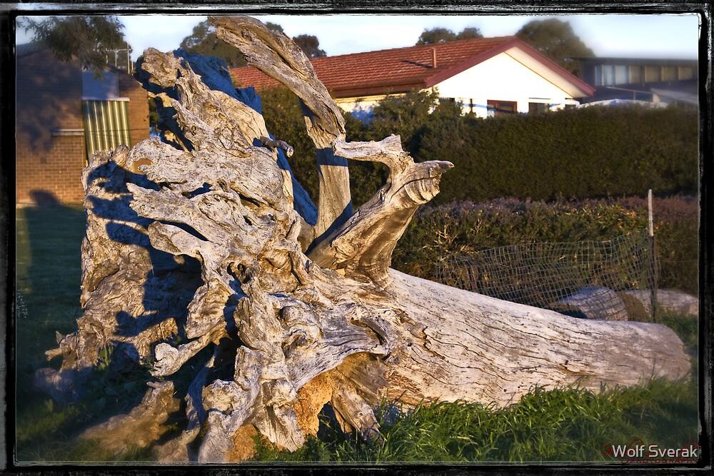 Late Afternoon at the Pinnacle by Wolf Sverak