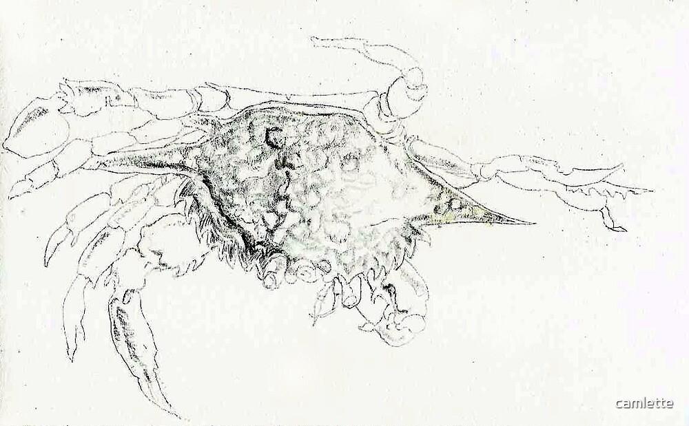 Crab by Cameron Hampton