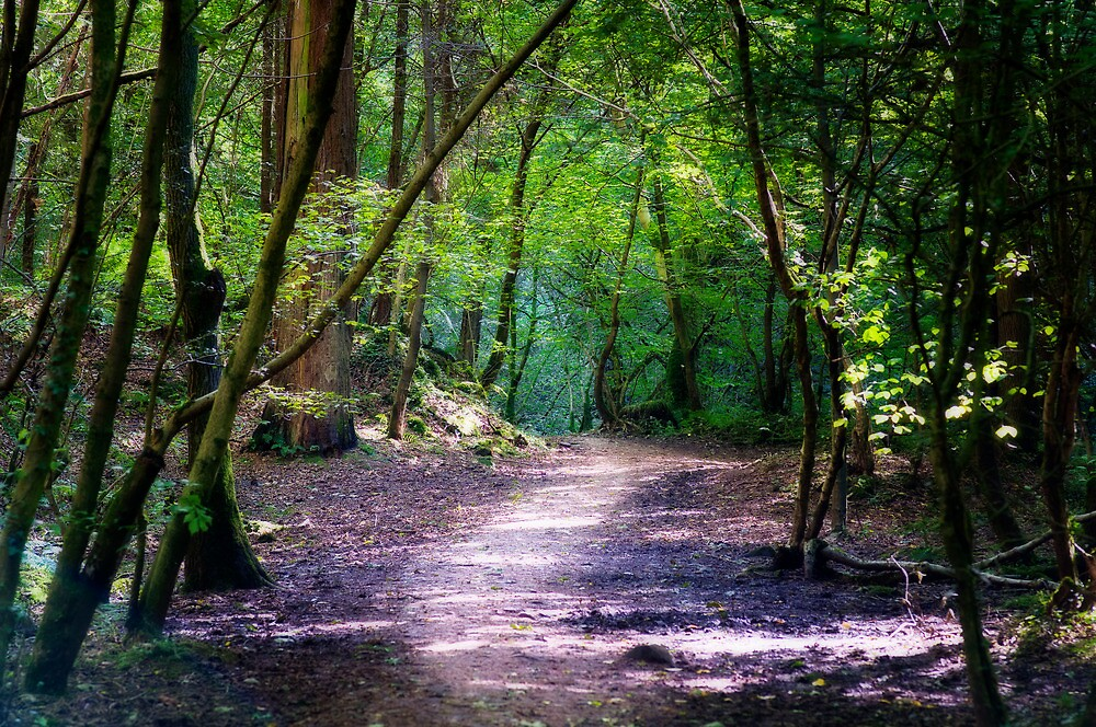 a walk in the woods by paul mcgreevy