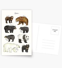 Bears Postcards