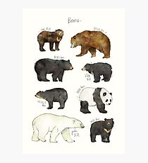 Bears Photographic Print