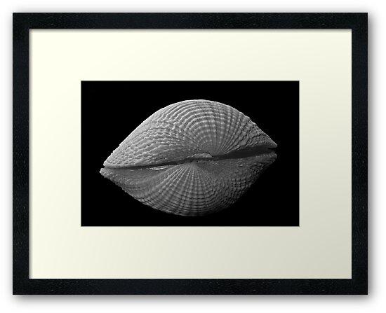 Shells by Bill Rowley