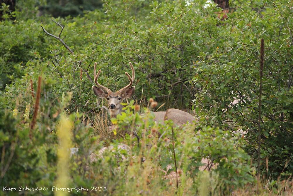 Colorado Mule Deer Buck by DressageFan1