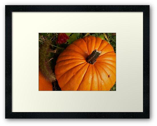 Harvest Orange by ArtBee