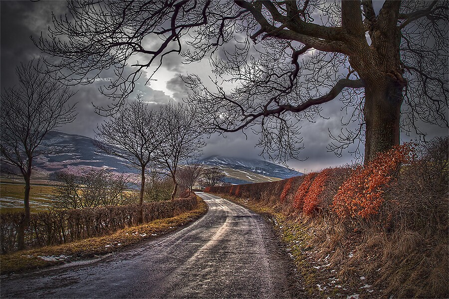 SCOTTISH HEDGEROW by Lynden
