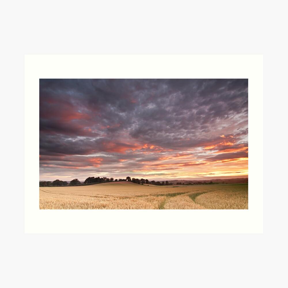 Field with a bump Art Print
