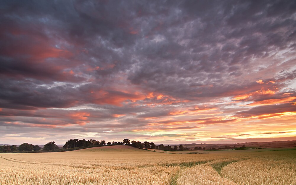 Field with a bump by james  thow