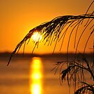 Golden Morning by BK Photography