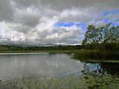 Llangorse Lake by Carol Bleasdale