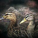 Duckies by Carol Bleasdale