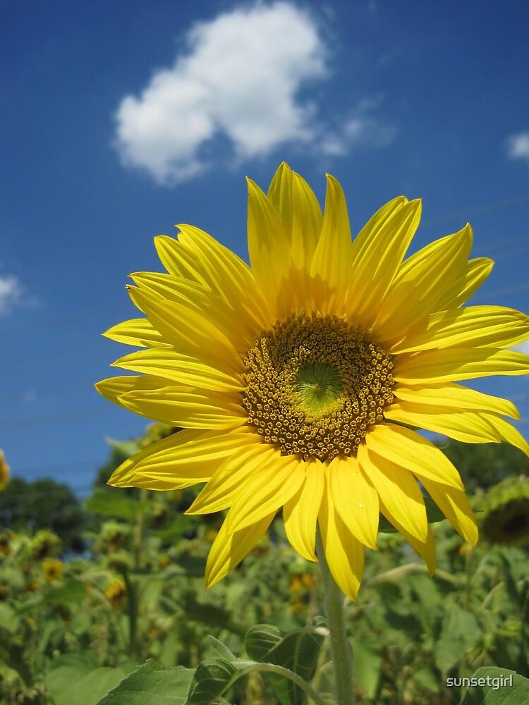 Summer Sunflower by sunsetgirl