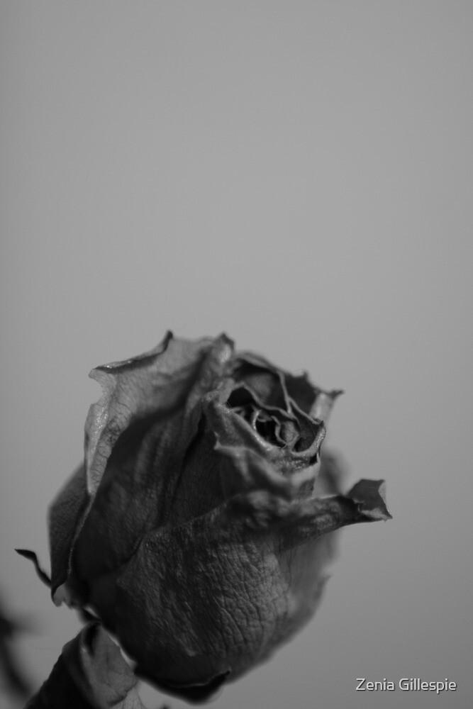 Untitled by Zenia Gillespie