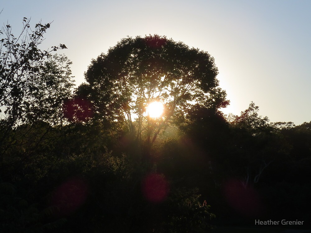 Light Shines Through by Heather Grenier