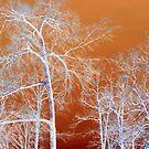 Inverted Trees by WildestArt