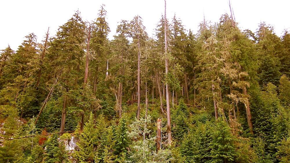 woods by john best