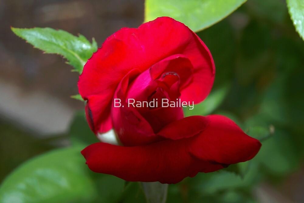 Budding, very red rose by ♥⊱ B. Randi Bailey