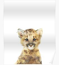 Little Mountain Lion Poster
