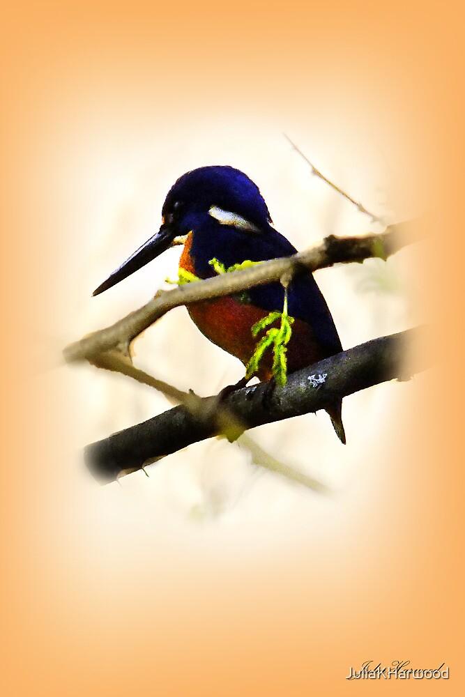 Blue Kingfisher by JuliaKHarwood