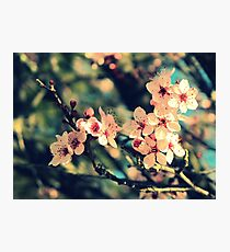 September Afternoon Photographic Print