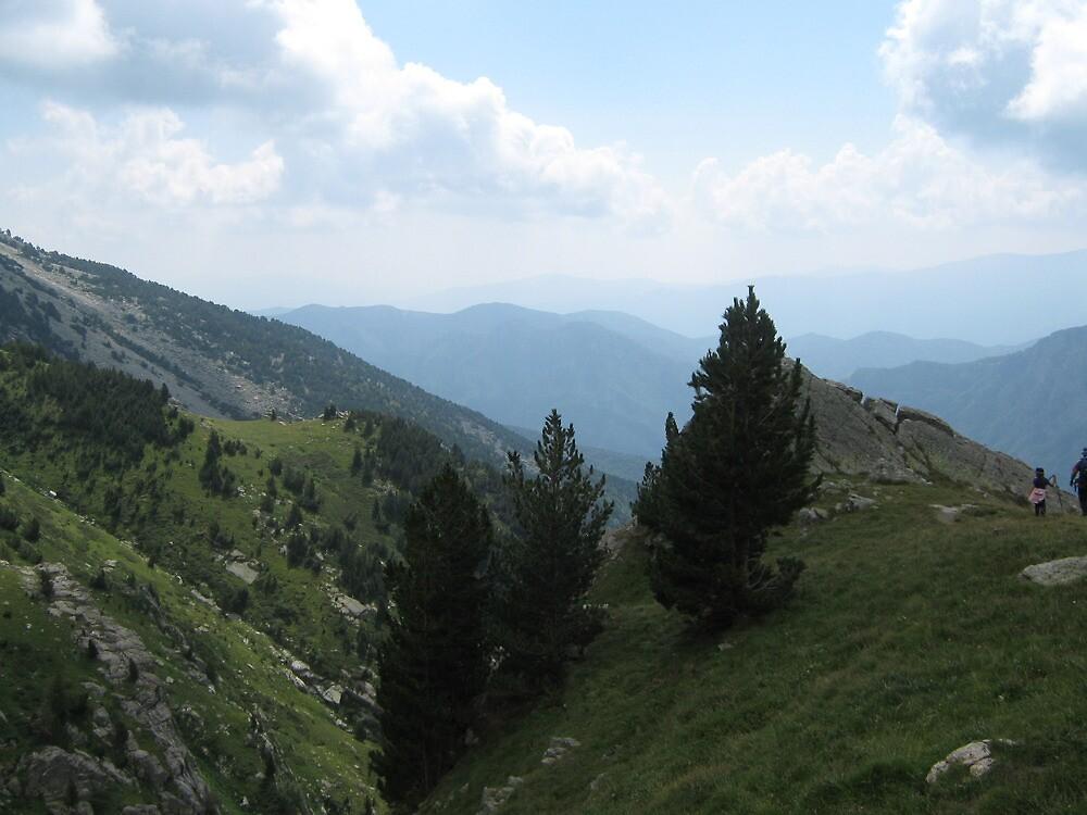 pine by Marmellino