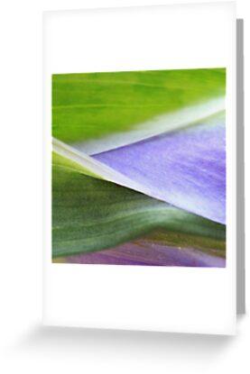 Lavender Morning by Kathie Nichols