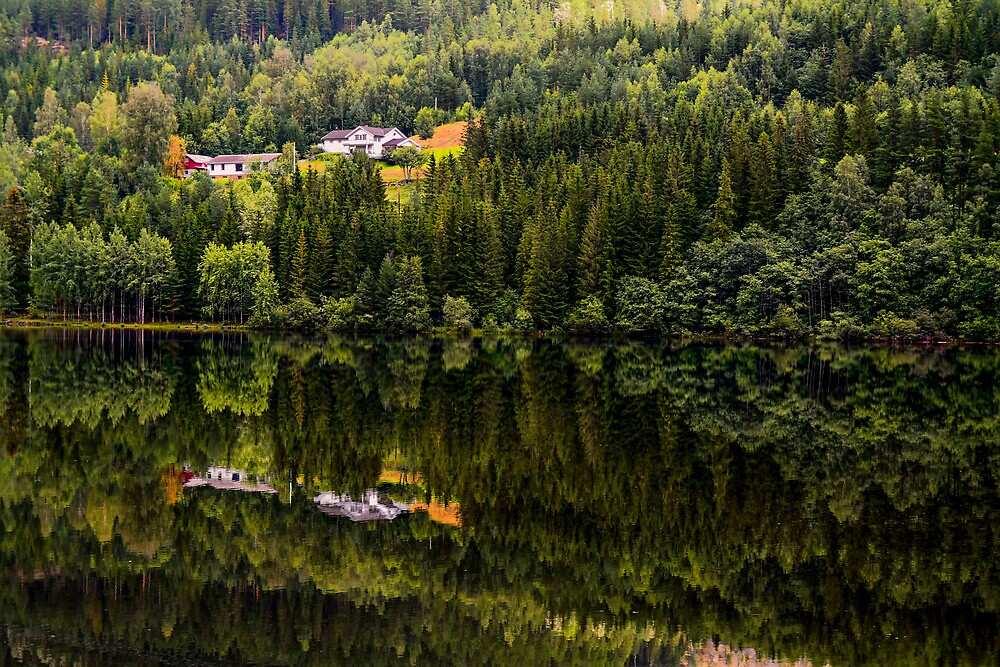 Reflected nature by Cristim