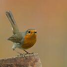 European Robin (Erithacus rubecula) by Peter Wiggerman