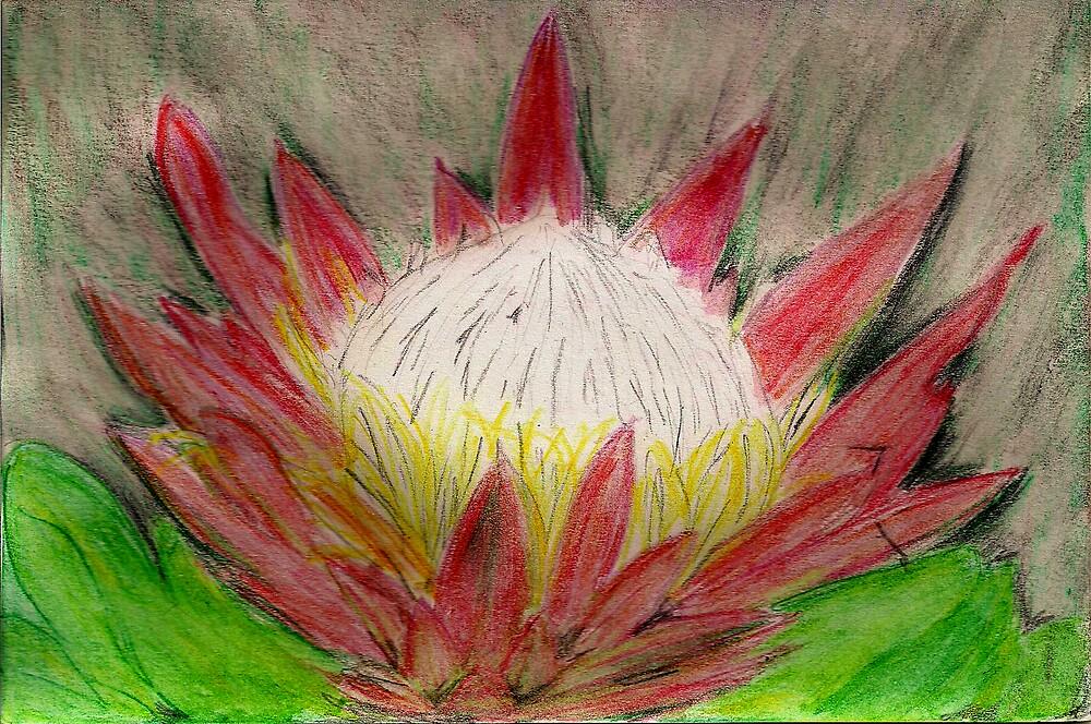 S. African Flower by lorileeg