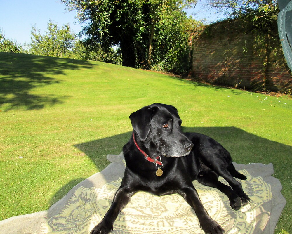 my dog jake enjoying the sunshine by margaret hanks