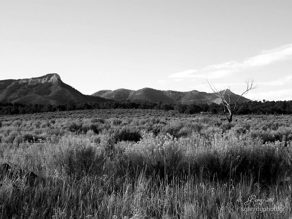 The Field by sgarrityphotogr