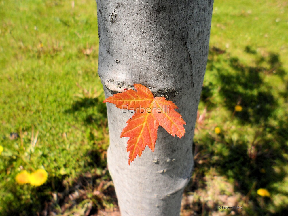 Orange Leaf Sticking out of a Tree by Barberelli