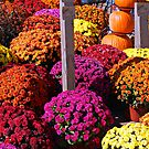 Fall Color by Grinch/R. Pross