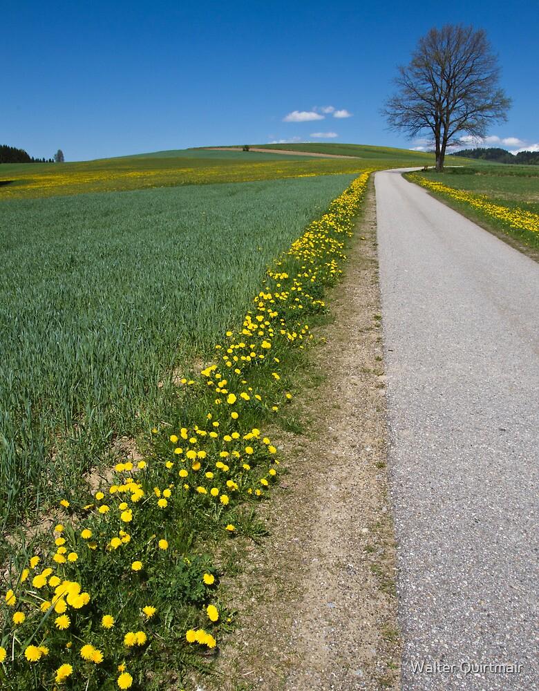 Rural Road by Walter Quirtmair