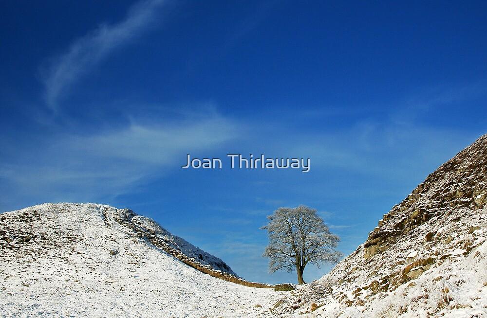 Hadrian's Wall at Sycamore Gap by Joan Thirlaway