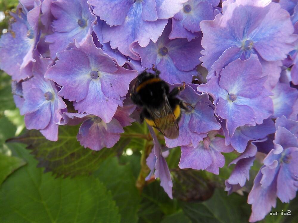 Hydrangea blues & busy bees by sarnia2