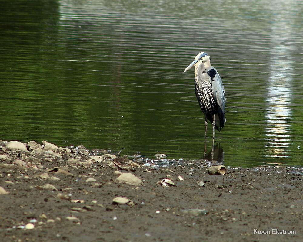 Blue Heron by Kwon Ekstrom