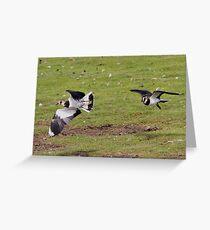 Lapwings Greeting Card