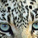 Cats eyes! by Anthony Goldman
