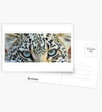 Cats eyes! Postcards