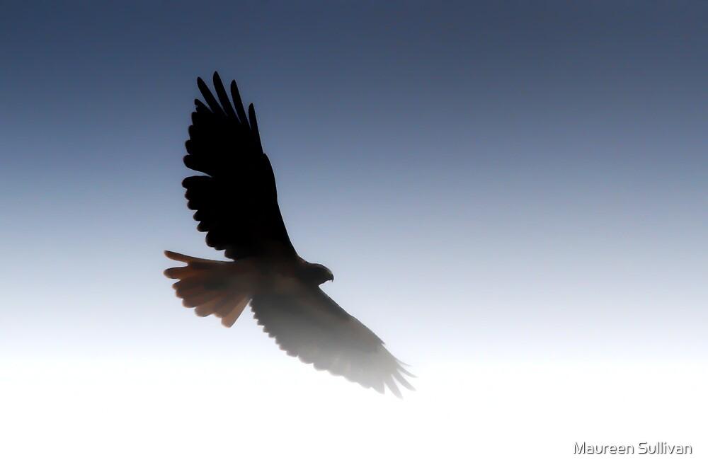 Flying Hawk Silhouette by Maureen Sullivan